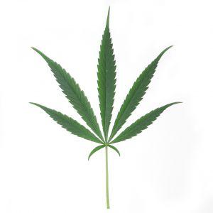 sweet-leaf-605076-m