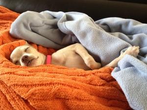 puppy---httpfacebook-compunkinobsivac-1373027-m