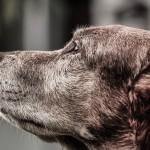 Sprzątanie po psie – kosze na psie odchody