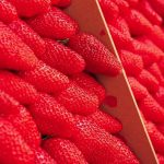 Jakie sadzonki wybierać do uprawy truskawek?